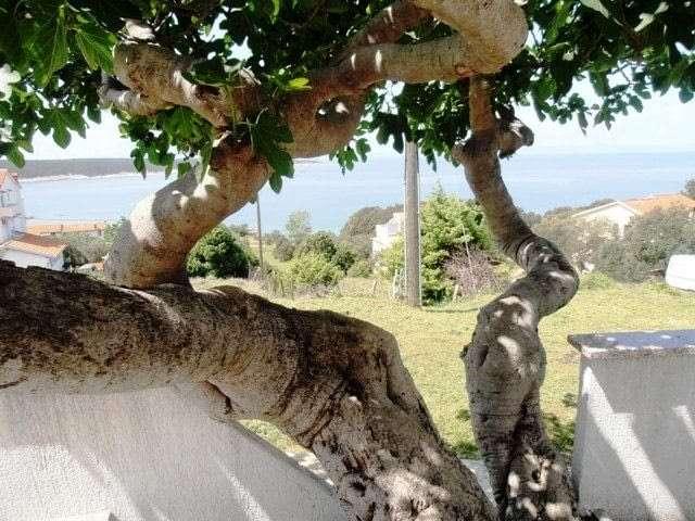 seaview+terrace+adriatic+islands